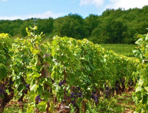 El éxito del vino procede de la tierra