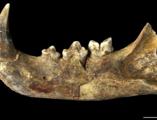 A minaría axuda a descubrir os fósiles galegos